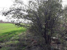 ILFOV-MOARA VLASIEI-DE 85, TEREN INTRAVILAN
