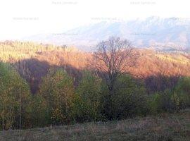 Teren de vanzare Magura-Brasov un colt de rai  22 euro/mp