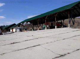 Teren agricol Comuna Dealu , Harghita  50.531 mp