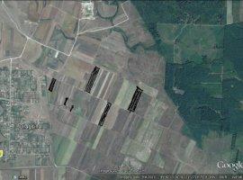Vanzare  terenuri agricol  50 ha Timis, Dragsina  - 50000 EURO