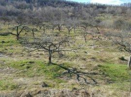 Vanzare  terenuri agricol Arges, Dobresti  - 3372 EURO