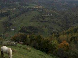 Regim hotelier  hoteluri/pensiuni Cluj, Muntele Rece