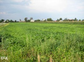Vanzare  terenuri constructii  6900 mp Suceava, Salcea  - 14700 EURO