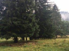 Vanzare  terenuri constructii Suceava, Malini  - 39000 EURO