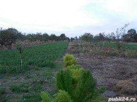Vanzare  casa  5 camere Timis, Hodos (Darova)  - 40000 EURO