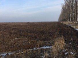 Inchiriere  terenuri agricol Ilfov, Silistea Snagovului  - 0 EURO lunar
