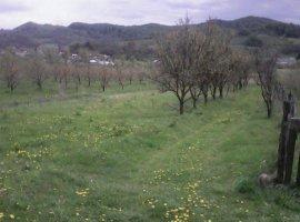 Vanzare  terenuri agricol  5400 mp Dambovita, Pietrari  - 8000 EURO