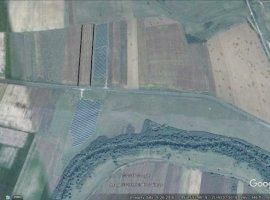 Vanzare  terenuri agricol  20 ha Timis, Belint  - 22500 EURO