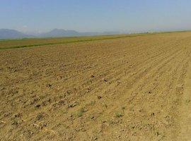 Vanzare  terenuri agricol Brasov, Stupinii Prejmerului  - 13000 EURO