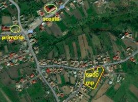 Vanzare  casa  3 camere Bacau, Poduri  - 99000 EURO