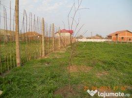 Vanzare  terenuri constructii  886 mp Constanta, Nicolae Balcescu  - 0 EURO