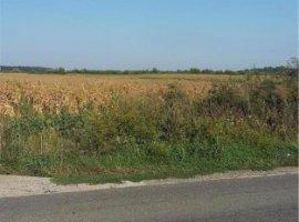 Vanzare  terenuri constructii  16.6 ha Timis, Bucovat (Remetea Mare)  - 0 EURO