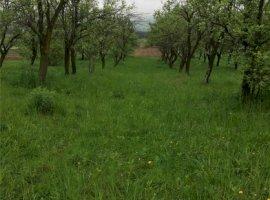 Vanzare  terenuri constructii  12.5 ha Arges, Baiculesti  - 0 EURO