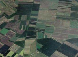 Vanzare  terenuri constructii  70 ha Timis, Pesac  - 140000 EURO