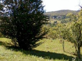 Vanzare  terenuri constructii  5000 mp Prahova, Alunis  - 30000 EURO